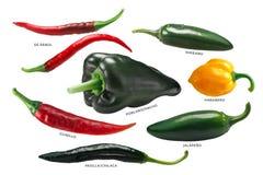 Μεξικάνικα πιπέρια της Χιλής, πορείες Στοκ φωτογραφία με δικαίωμα ελεύθερης χρήσης