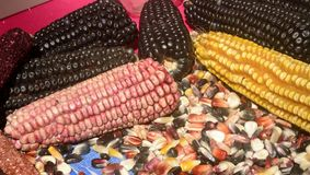 Μεξικάνικη ποικιλομορφία καλαμποκιού, άσπρο καλαμπόκι, μαύρο καλαμπόκι, μπλε καλαμπόκι, κόκκινο καλαμπόκι, άγριο καλαμπόκι και κί Στοκ φωτογραφία με δικαίωμα ελεύθερης χρήσης