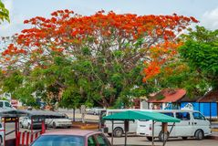 Μεξικάνικη πόλη, με το δέντρο regia Delonix, με τα κόκκινα λουλούδια στοκ φωτογραφία