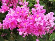 Μεξικάνικο αναρριχητικό φυτό Στοκ φωτογραφία με δικαίωμα ελεύθερης χρήσης