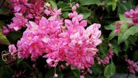 Μεξικάνικο αναρριχητικό φυτό Στοκ εικόνες με δικαίωμα ελεύθερης χρήσης