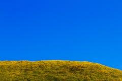 μεξικάνικο ζιζάνιο ηλίανθ& Στοκ εικόνες με δικαίωμα ελεύθερης χρήσης
