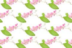 Μεξικάνικο λουλούδι αναρριχητικών φυτών Στοκ φωτογραφίες με δικαίωμα ελεύθερης χρήσης