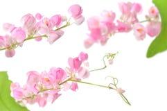 Μεξικάνικο λουλούδι αναρριχητικών φυτών Στοκ εικόνες με δικαίωμα ελεύθερης χρήσης