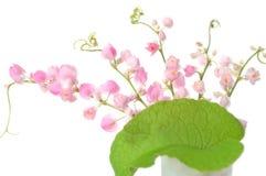 Μεξικάνικο λουλούδι αναρριχητικών φυτών Στοκ εικόνα με δικαίωμα ελεύθερης χρήσης