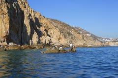 Μεξικό cabo Lucas SAN Το νησί των πελεκάνων Στοκ Φωτογραφία