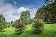 Μερικά δέντρα στο λιβάδι στοκ εικόνα με δικαίωμα ελεύθερης χρήσης