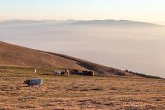 Μερικά αγελάδες και άλογα που βόσκουν σε ένα βουνό στο ηλιοβασίλεμα, με την ομίχλη κάτω από και τα πολύ θερμά χρώματα Στοκ φωτογραφία με δικαίωμα ελεύθερης χρήσης