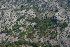 Μερικά δέντρα στα βουνά στοκ εικόνα