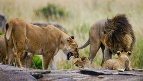 Μερικά λιοντάρια βρίσκονται σε έναν μεγάλο βράχο Κένυα Τανζανία Maasai Mara serengeti Στοκ Εικόνα