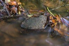 Μερικά φύλλα φθινοπώρου περιερχόμενος στον ποταμό στοκ εικόνα