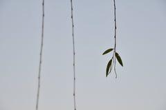 Μερικά φύλλα Στοκ φωτογραφία με δικαίωμα ελεύθερης χρήσης