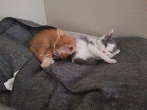 Μερικά χαριτωμένα γατάκια Στοκ Εικόνα