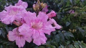 Μερικά όμορφα λουλούδια σε ένα πάρκο Στοκ φωτογραφία με δικαίωμα ελεύθερης χρήσης