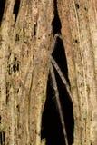 Μερικές αράχνες είναι τέλεια καλυμμένες και σχεδόν αόρατες Στοκ φωτογραφία με δικαίωμα ελεύθερης χρήσης