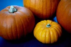 Μερικές κολοκύθες βρίσκονται στην ουδέτερη επιφάνεια Συγκομιδή, αποκριές Το πορτοκάλι είναι ένα θερμό χρώμα Στοκ Φωτογραφία