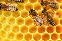 Μερικές μέλισσες Στοκ εικόνες με δικαίωμα ελεύθερης χρήσης