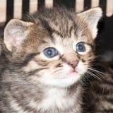 Μερική εβδομάδα παλαιά και πολύ περίεργη λίγο γατάκι στοκ φωτογραφίες