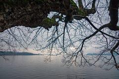 Μερικοί γυμνοί κλάδοι των δέντρων επεκτείνονται προς τα ήρεμα νερά του τ Στοκ φωτογραφία με δικαίωμα ελεύθερης χρήσης