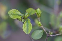 Μερικοί φυτεύουν κοντά αυξημένος Στοκ Φωτογραφία