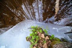 Μερικώς παγωμένη δασική λεπτομέρεια ποταμών Στοκ εικόνες με δικαίωμα ελεύθερης χρήσης