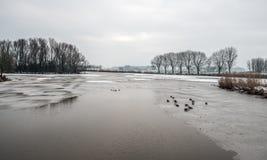 Μερικώς παγωμένη λίμνη με τους πρασινολαίμες στήριξης στοκ εικόνα με δικαίωμα ελεύθερης χρήσης