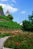 Μεσαιωνική φυτεία με τριανταφυλλιές στοκ εικόνες