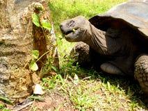 Μεσημεριανό γεύμα χελωνών στοκ φωτογραφίες με δικαίωμα ελεύθερης χρήσης