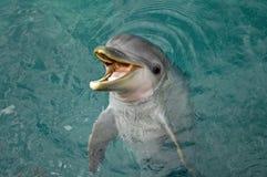 μεσημεριανό γεύμα s δελφινιών όπου Στοκ Εικόνες
