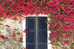 Μεσογειακά λουλούδια που περιβάλλουν ένα παράθυρο με τα παραθυρόφυλλα Στοκ Εικόνες