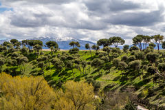 Μεσογειακά πεύκα και βουνά Segovia, Ισπανία Στοκ Φωτογραφίες