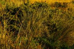 Μεσογειακή βλάστηση ακτών Στοκ εικόνα με δικαίωμα ελεύθερης χρήσης