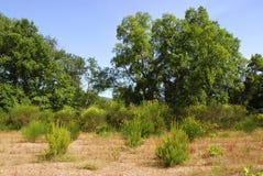 μεσογειακή βλάστηση στοκ φωτογραφίες με δικαίωμα ελεύθερης χρήσης