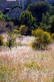 μεσογειακή βλάστηση Στοκ Φωτογραφίες
