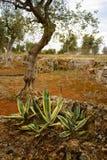 Μεσογειακός κήπος, κινηματογράφηση σε πρώτο πλάνο ο κλάδος στοκ φωτογραφία με δικαίωμα ελεύθερης χρήσης