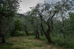 Μεσογειακός κήπος, κινηματογράφηση σε πρώτο πλάνο ο κλάδος στοκ εικόνα με δικαίωμα ελεύθερης χρήσης