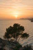 Μεσόγειος δέντρων ηλιοβασιλέματος, Ισπανία Στοκ φωτογραφίες με δικαίωμα ελεύθερης χρήσης