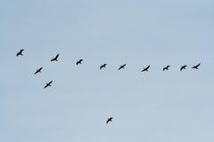 μετάβαση πουλιών στοκ εικόνες
