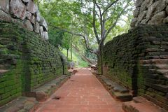 Μετάβαση στο βράχο λιονταριών σε Sigiriya που ξεπερνιέται και που αυξάνεται με το βρύο στοκ φωτογραφία