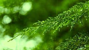 Μετά από την τροπική βροχή πρωινού Πράσινο φύλλο, βρέχοντας χρόνος κήπος τροπικός απόθεμα βίντεο