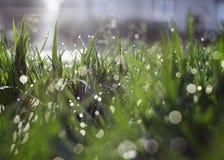 Μετά από τη βροχή Στοκ φωτογραφίες με δικαίωμα ελεύθερης χρήσης