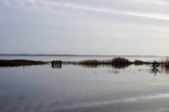 Μετά από τη θύελλα Στοκ εικόνες με δικαίωμα ελεύθερης χρήσης