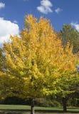 μεταβαλλόμενο χρώμα Στοκ Εικόνα