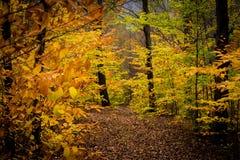 Μεταβαλλόμενα φύλλα στοκ εικόνες