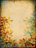 μεταβαλλόμενα φύλλα Στοκ Εικόνα