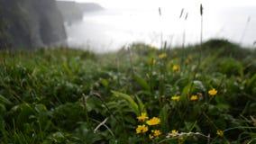 Μετακίνηση εστίασης χλόης της νότιας άποψης που κοιτάζει πέρα από τους απότομους βράχους Moher στη κομητεία Clare, Ιρλανδία φιλμ μικρού μήκους