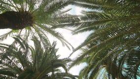 Μετακίνηση καμερών στην αλέα φοινικών Οι τύποι φυτεύονται και στις δύο πλευρές της αλέας Fon ή σύσταση απόθεμα βίντεο