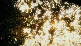 Μετακινηθείτε τα κράτη μέλη: Ήλιος που λάμπει μέσω των δέντρων απόθεμα βίντεο