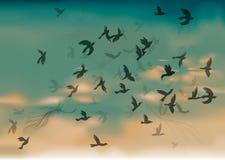μετανάστευση πουλιών Στοκ φωτογραφίες με δικαίωμα ελεύθερης χρήσης