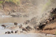 Μετανάστευση Wildebeest στοκ εικόνα με δικαίωμα ελεύθερης χρήσης